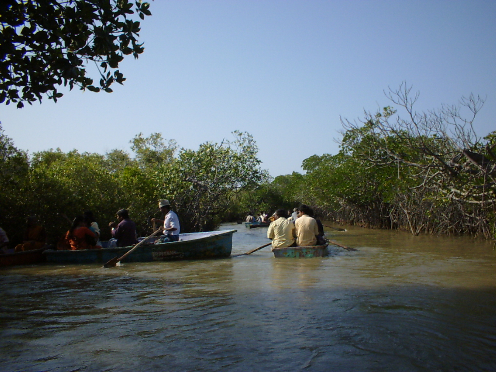 Boat ride in the mangrove waters1