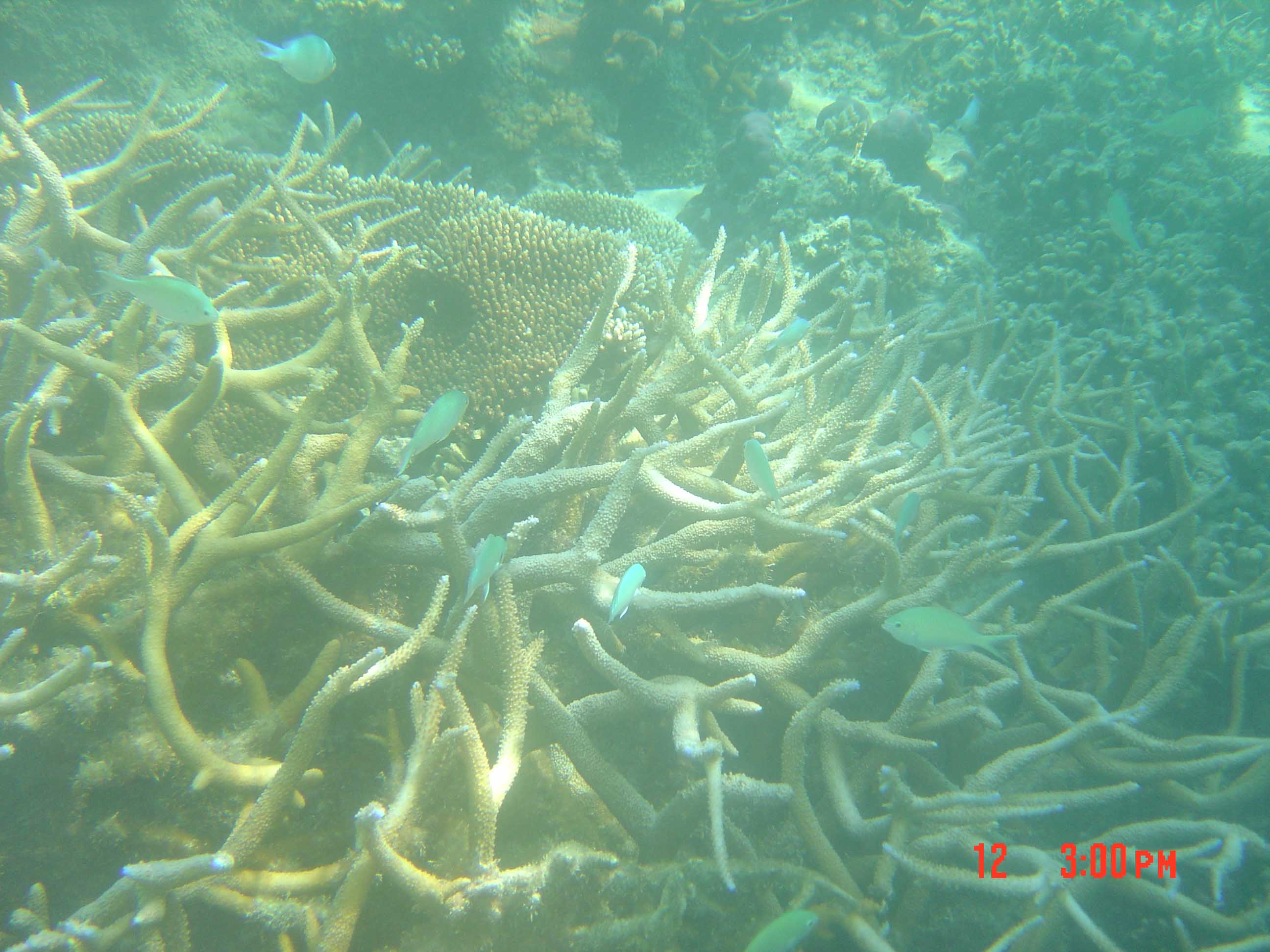 Corals supporting faunal (fish) diversity