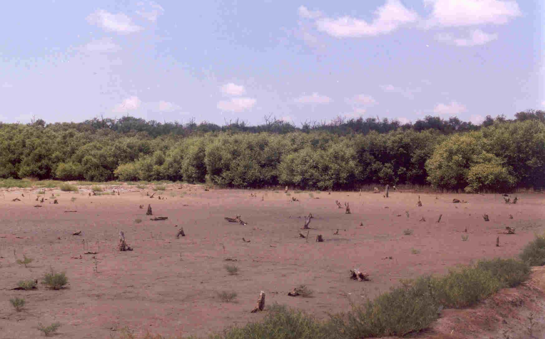 Degradation of mangroves due to hypersaline condition