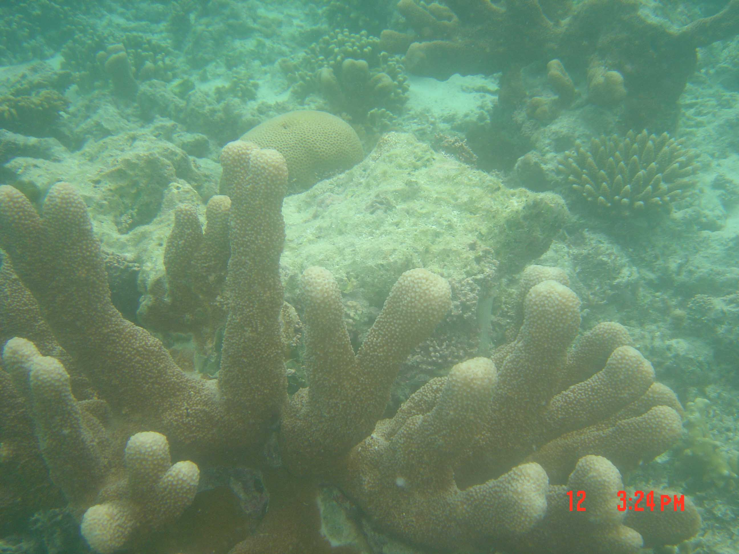 Profusion of corals - Acropora spp. and Favia spp.